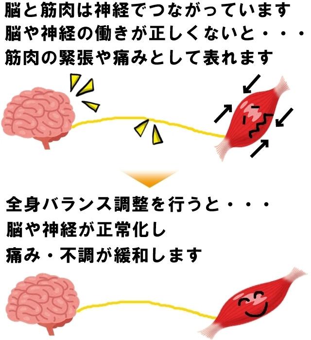 脳、神経、筋肉のつながり