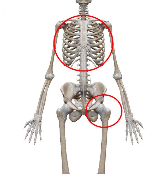 胸郭と股関節