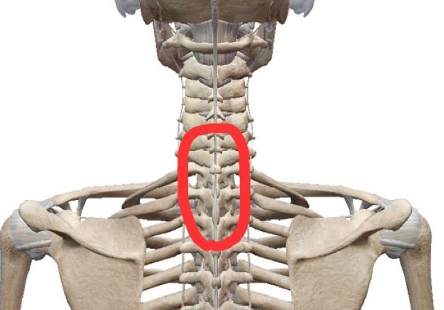 胸腰椎移行部